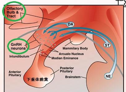 ホルム ストローム 療法