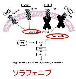 放射線治療無効な分化型甲状腺癌...